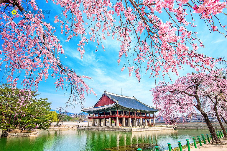 Du Học Hàn Quốc5